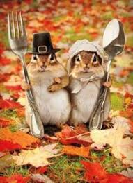 thanksgiving animal pictures the lucky
