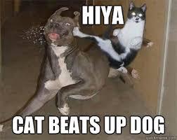 Dog And Cat Memes - hiya cat beats up dog cat will always beat dogs quickmeme