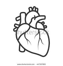 isolated human heart stock vector 734270719 shutterstock
