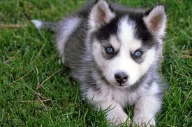 dog wallpaper claws cute dog images desktop images fidelity