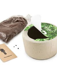 bio urn bio urn tree urns for ashes