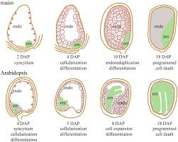 frontiers imprinting in plants as a mechanism to generate seed