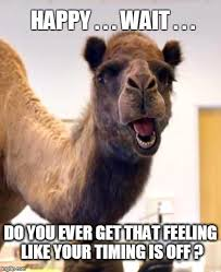 Happy Tuesday Meme - image tagged in hump day camel hump day happy tuesday that feeling