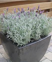 Patio Plants For Sun Perennial Flowers Border Sun Shade Perennial Plants Seeds
