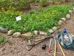 fort pond native plants native plants arlingtonmasternaturalists