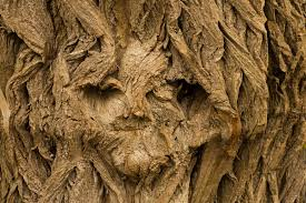 tree face free images man landscape nature branch structure wood
