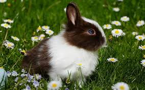 rabbit food best rabbit food reviews and tips for choosing