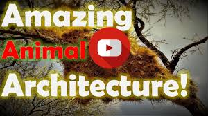 top 5 amazing animal architects ever best five most amazing
