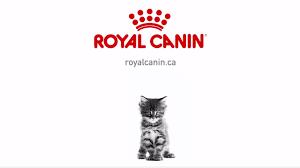 royal canin u2013 kitten youtube
