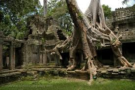 pictures of cambodia angkor 2 0042 ta prohm temple trees