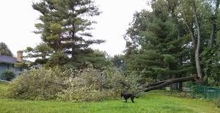 erratic words a tree fell in our backyard