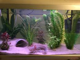 fish care tips my axolotl tank fully set up with my little