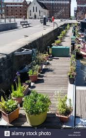 unusual outdoor garden effect with floral planters lining a jetty