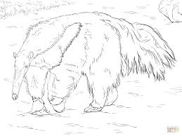 giant anteater coloring page free printable coloring pages