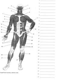 label muscles worksheet body muscles pinterest muscle