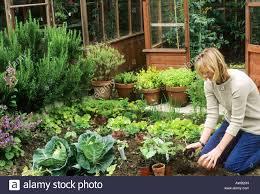 vegetable garden fence ideas 100 small vegetable garden small vegetable garden design