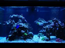 Aquascaping A Reef Tank Aquascaping Pictures Ideas And Sketches Page 2 Reef2reef