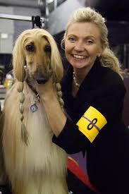 afghan hound national dog show 35 best westminster kennel club dog show 2013 images on pinterest