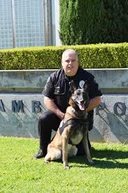 belgian malinois vest alhambra police department k9 to receive ballistic vest alhambra