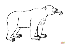 sun bear possesses a very long tongue coloring page free