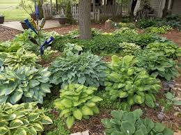 109 best garden ideas images on pinterest garden ideas