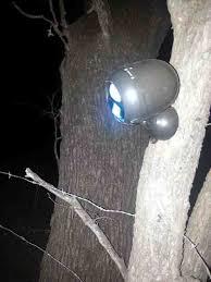 hog hunting lights for feeder feeder light hog hunt varmint small game hunting texas
