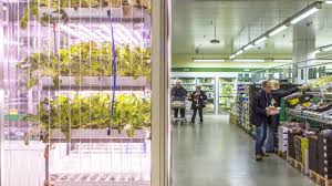 berlin u0027s supermarket where vegetables grow in a vertical garden