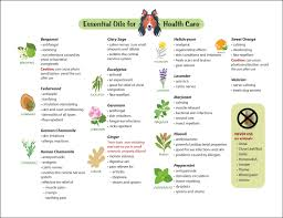 15 Essential Oils For Dogs Chart Guide Common Ailments Canine