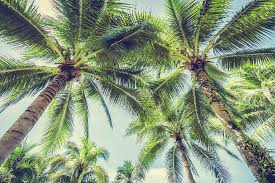 palm branches for palm sunday why the palm branches sunday right song right time