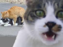 Gasp Meme - gasp cats know your meme