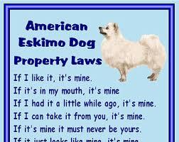 american eskimo dog nz american eskimo dog etsy