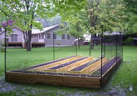 this garden has two great deterrents raised beds and tall
