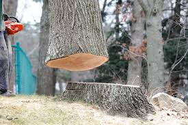 10 signs you need dangerous tree removal services precision tree