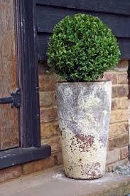 sweet viburnum 200mm pot viburnum 145 best courtyard garden images on pinterest balcony courtyard