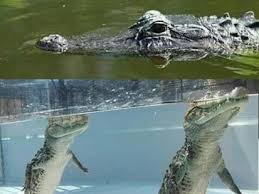 Crocodile Meme - crocodile memes 50 best funny crocodile memes of 2018