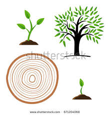tree growth diagram green leaf nature stock vector 666509008