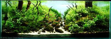 Aquascaping Freshwater Aquarium Manage Your Freshwater Aquarium Tropical Fishes And Plants Aga