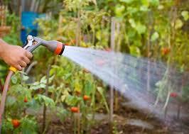 lovable watering vegetable garden watering the vegetable garden