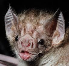 halloween bats archives rapid pest solutions