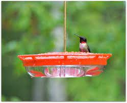 Jewel Box Window Hummingbird Feeder Ruby Throated Hummingbird U2013 Amy U0027s Birds