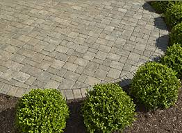 Concrete Patio Pavers by Concrete Patio Pavers With Ring Of Small Bushes Home Ideas