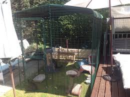 cat running into glass door outdoor cat run large spacious outdoor cat enclosure