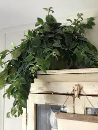 easy to care for houseplants u2013 beautiful treasures blog