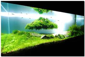 Tank Aquascape Reef Aquarium Aquascape Designs Aquascape Aquarium Designs