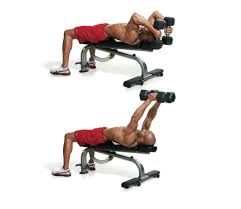 Bench Bicep Curls The 30 Best Arm Exercises Of All Time