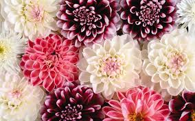 Wallpaper With Flowers Flower Wallpaper Hd On Wallpaperget Com