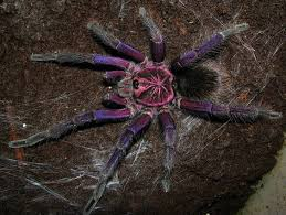 free spider time winter specials rozzer s tarantulas