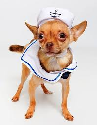Ridiculous Halloween Costumes 25 Funny Halloween Costumes Dogs