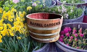 Half Barrel Planter by Get My Perks 39 For A Half Wine Barrel Planter 90 Value