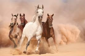 running horses wallpaper photo wall mural by loveabode com an165619817 horses in dust 2p
